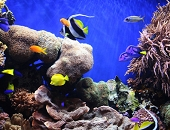 Live animal range (Corals and fishes)